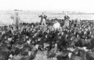 Η Ελένη Γιολδάση με τα Γαλόπουλα ελευθέρας βοσκής & τους φύλακες του κοπαδιού
